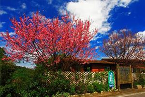 青山香草教育農園